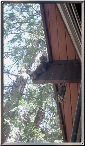 Squirrel on a beam