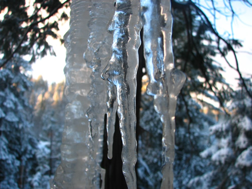 icicles at dawn